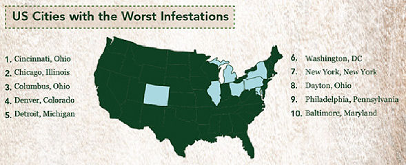 Bed Bugs Are Out Of Control Preventing Greater Risks And - Map of bed bug infestation in us
